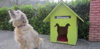 Cómo hacer una casa para perros en 10 pasos