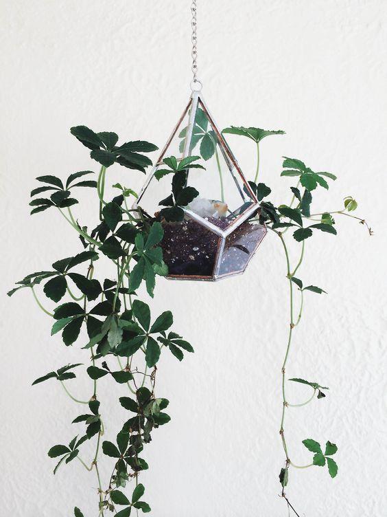 Decoración con plantas colgantes minimalistas