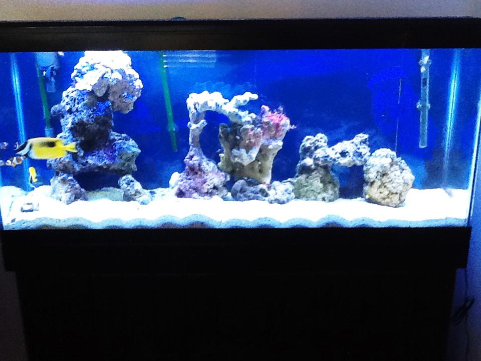 Restoration Saltwater Aquarium