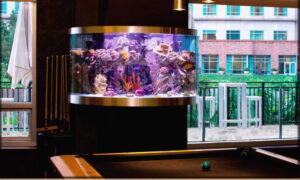 poolroom aquarium