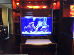 Custom Bow Aquarium