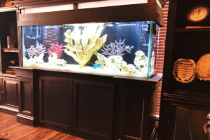 Salt Water Aquarium Living Room Furniture