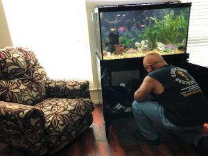 Commerical & Residential Aquarium Maintenance