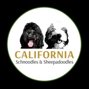 California Schnoodles and Sheepadoodles