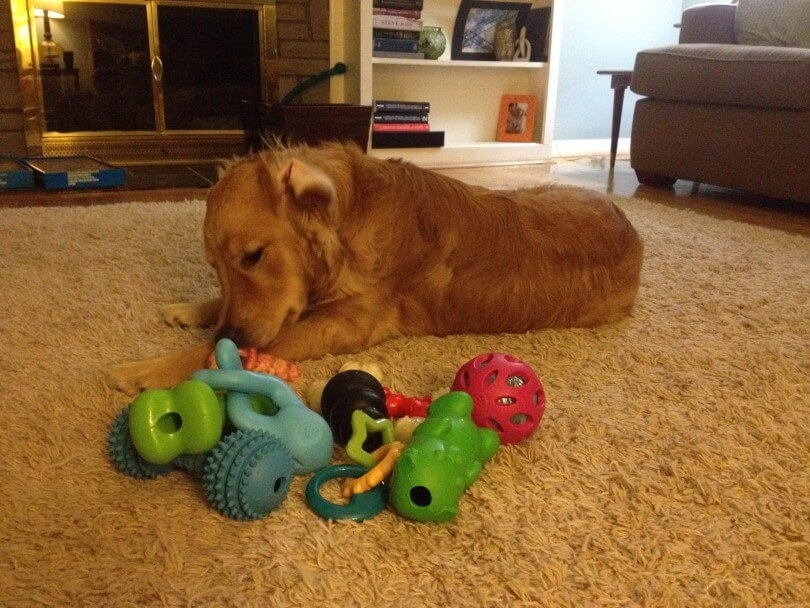 Our puppy Charlie with his new dog toys
