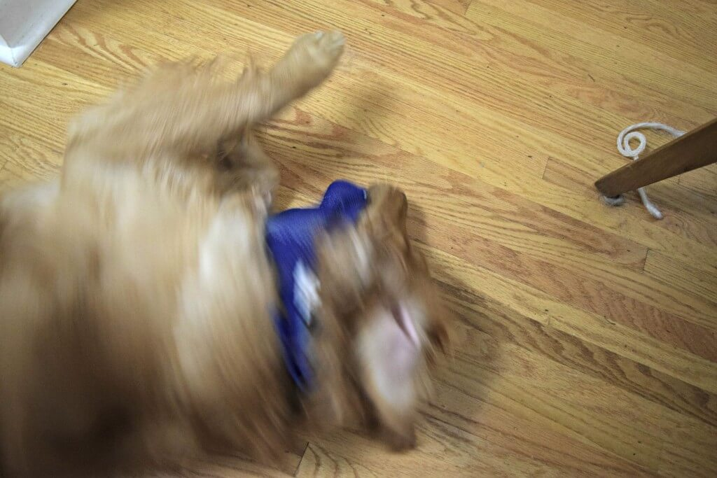 I guess Charlie is not ready for a bandanna!