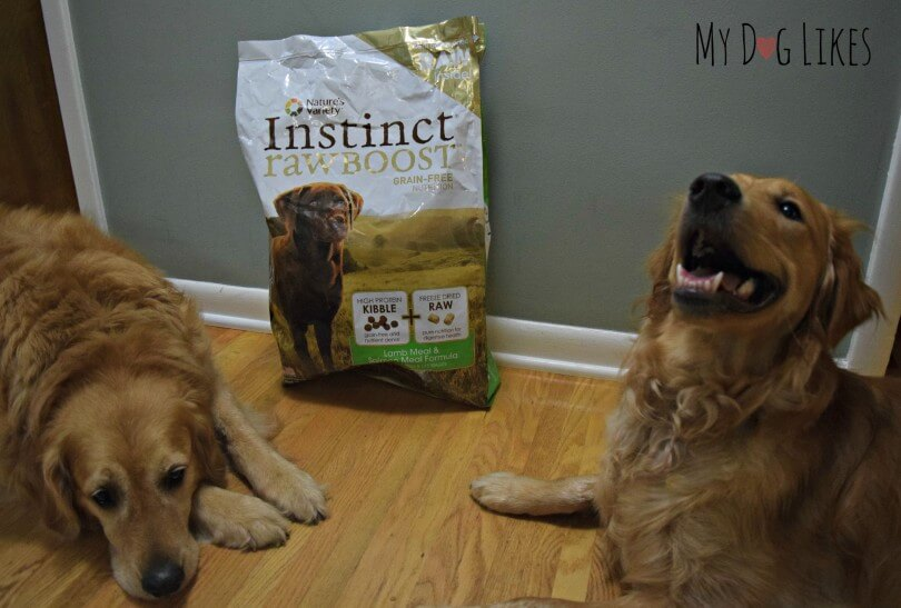 Harley and Charlie waiting to try Natures Variety Instinct Raw Boost