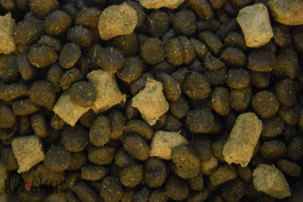 Freeze dried raw pieces mixed in with kibble.