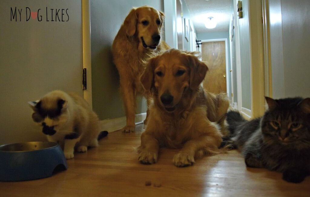 Our whole family (cats and dogs) want to try the new Instinct food!