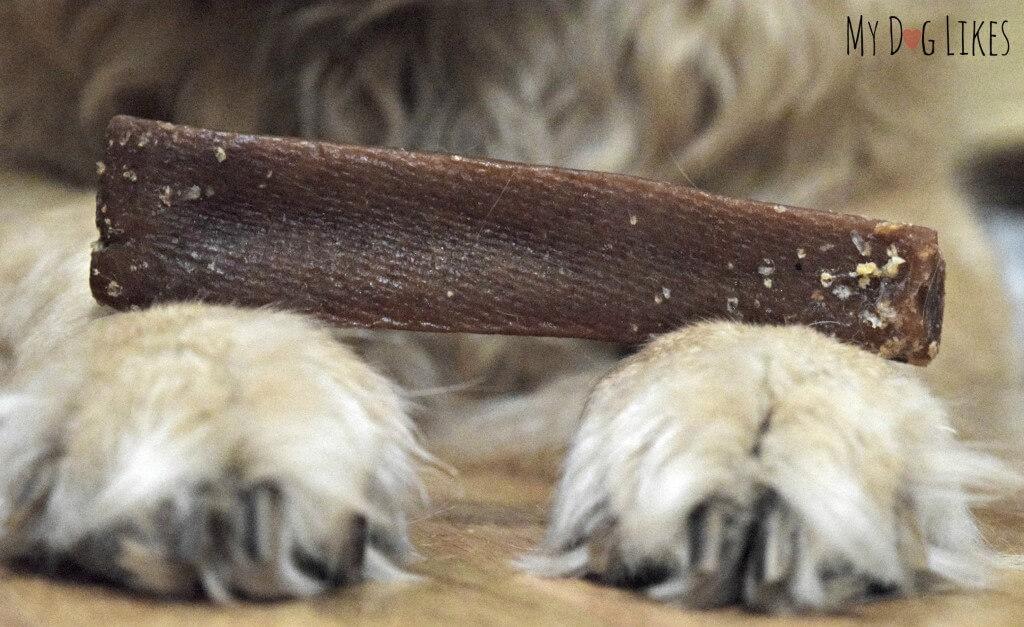 Closeup of a new Himalayan Dog Chew