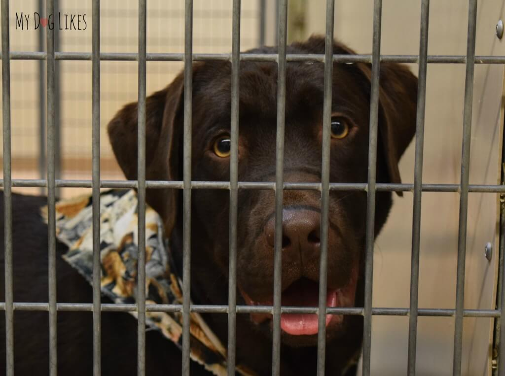 This cute pup is looking for a home! So many loving pets are waiting to meet their permanent families at Lollypop Farm!