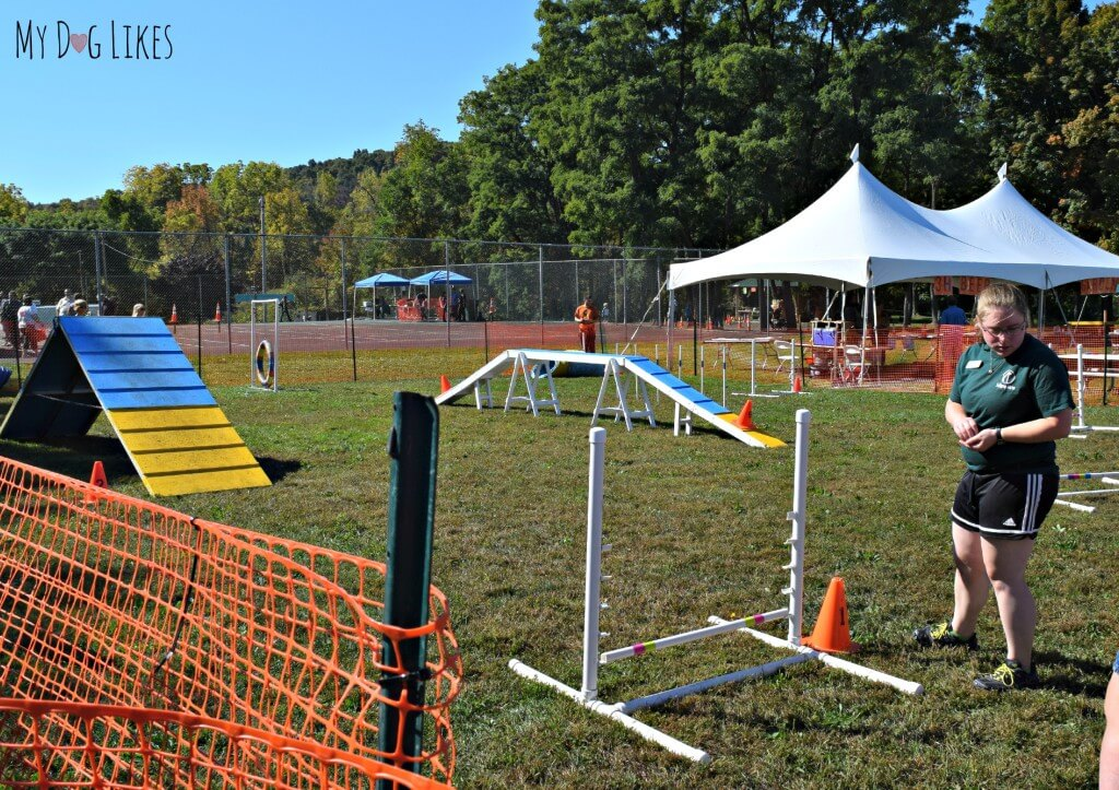 The Dog Agility Course at Lollypop Farm's Barktober Fest