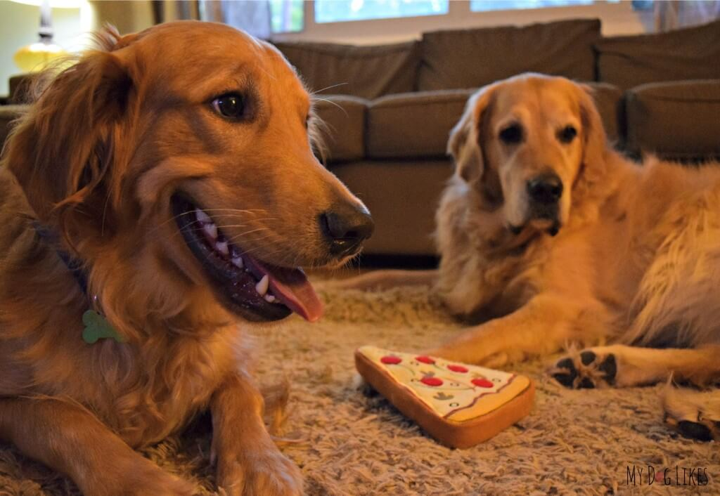 Our Golden Retrievers Harley and Charlie posing with their new PrideBite Pizza dog toy!