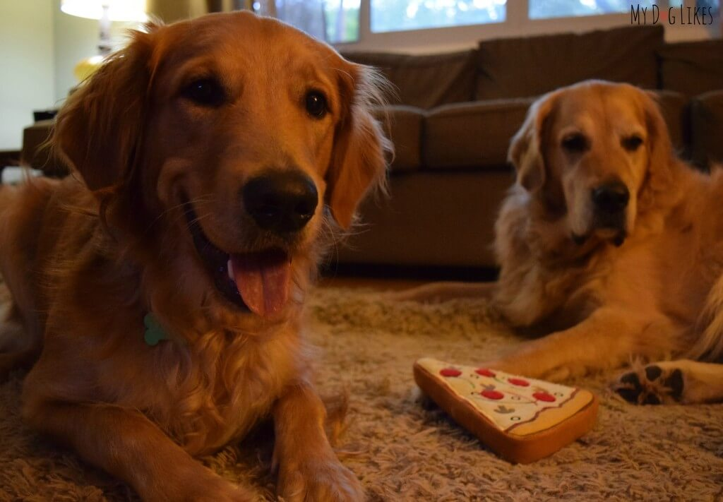 Harley and Charlie wondering who gets the last piece!