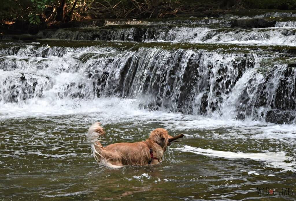Charlie playing in Allen's Creek below Postcard Falls. This is one of several waterfalls at Corbett's Glen in Rochester, NY.