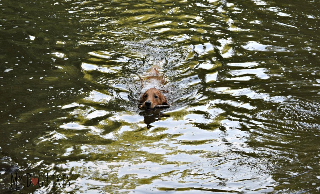 Charlie at the Corbett's Glen Swimming Hole. This is where he learned how to swim!