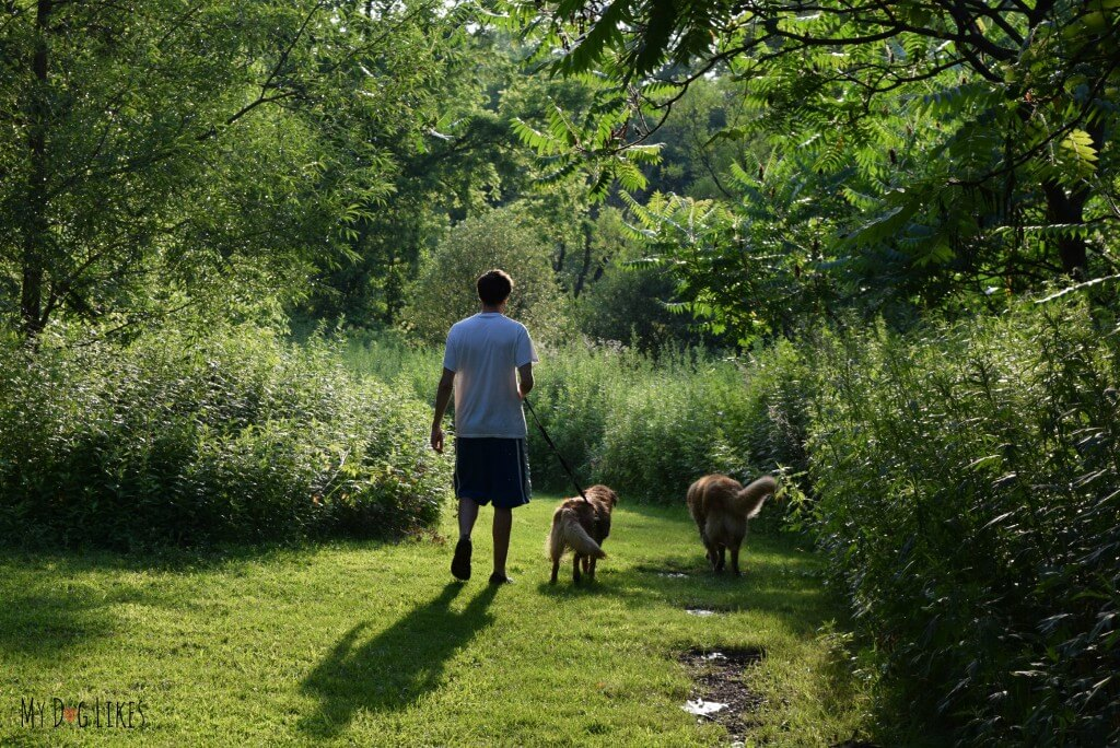 Strolling through the fields of Corbett's Glen with Harley and Charlie