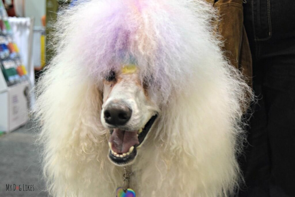 We ran into this colorful pup with dyed hair on the floor of the Total Pet Expo