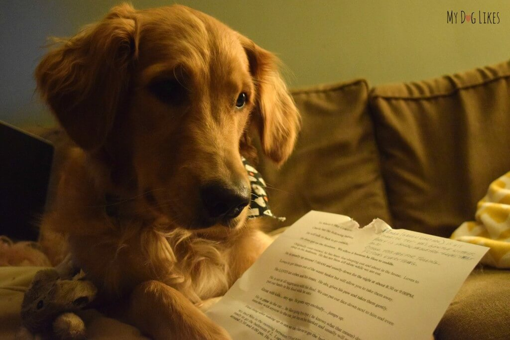 Our puppy Charlie trying to read his love letter! A truly touching dog adoption story!