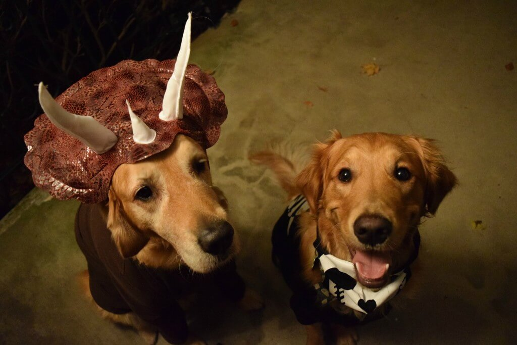 Harley in a dog dinosaur costume and Charlie dressed as a skeleton.