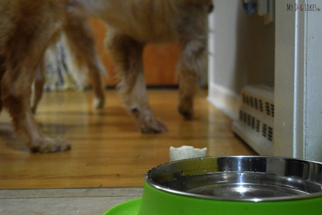 The Messy Mutts double feeder helps prevent the mess around your dog bowls by containing drips and spills.