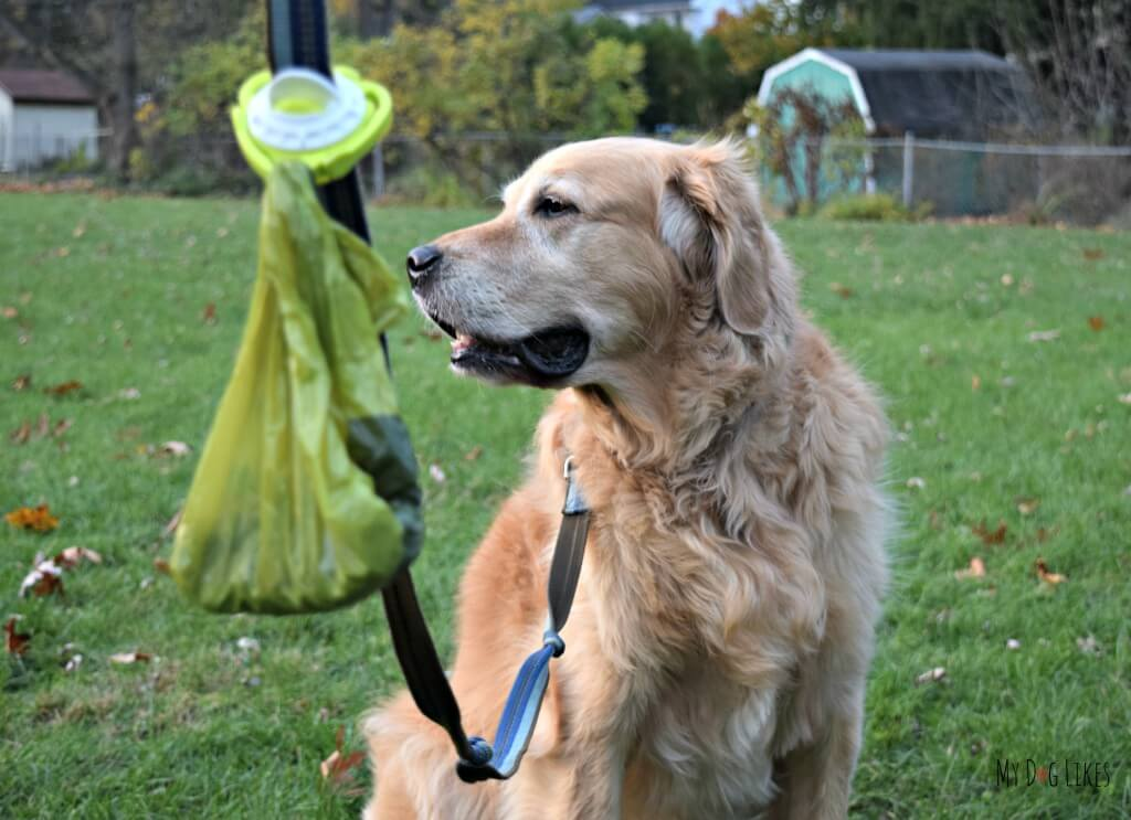MyDogLikes reviewing The Fifth Paw leash attachment. The fifth paw helps make your dog walks more enjoyable by carrying the used poop bags for you!