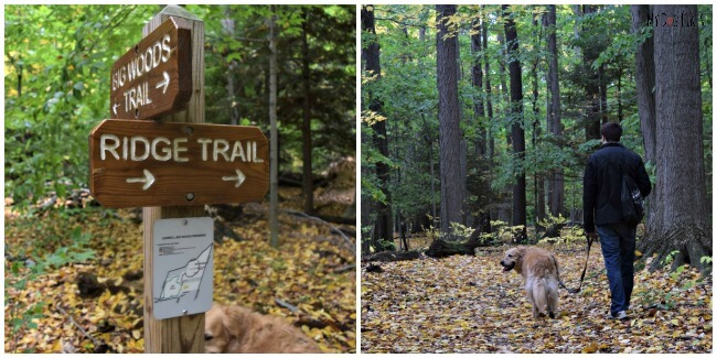 The intersection of the Big Woods and Ridge Trails at Gosnell Big Woods Preserve in Webster, NY
