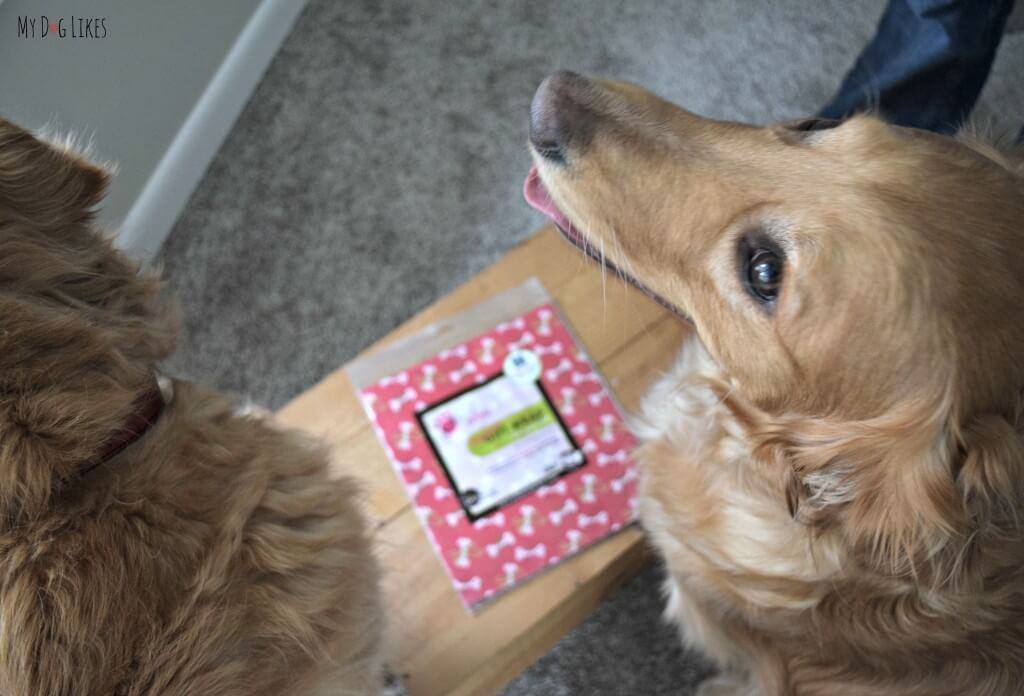 MyDogLikes official review of Pet Party Printz dog safe wrapping paper!
