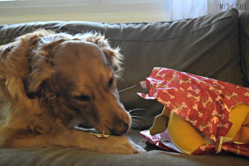 Our Dog Opening Presents on Christmas morning!