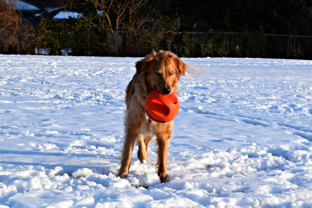 The Zeus Bomber is one of our favorite Outdoor Toys for Dogs. It is rugged, fun and versatile!