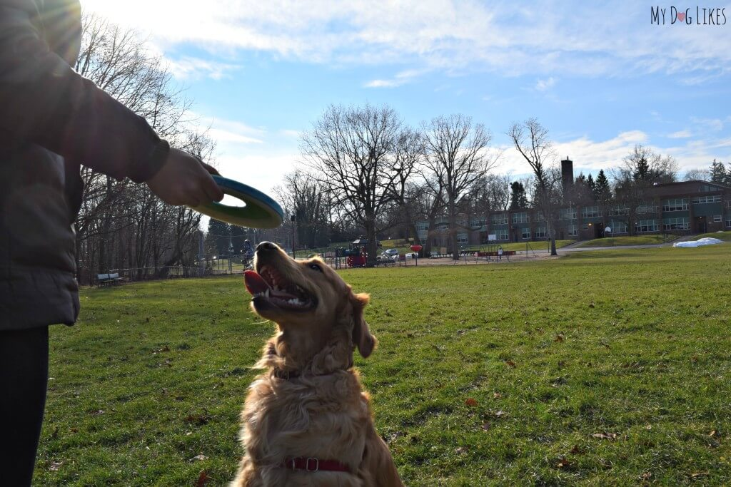 Chuckit makes the best dog fetch toys! Here we are playing with their new Zipflight frisbee.