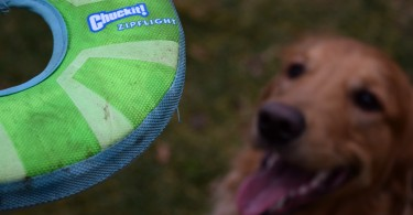 MyDogLikes reviews the Chuckit! Zipflight! See what our frisbee connoisseur thought of this dog toy!