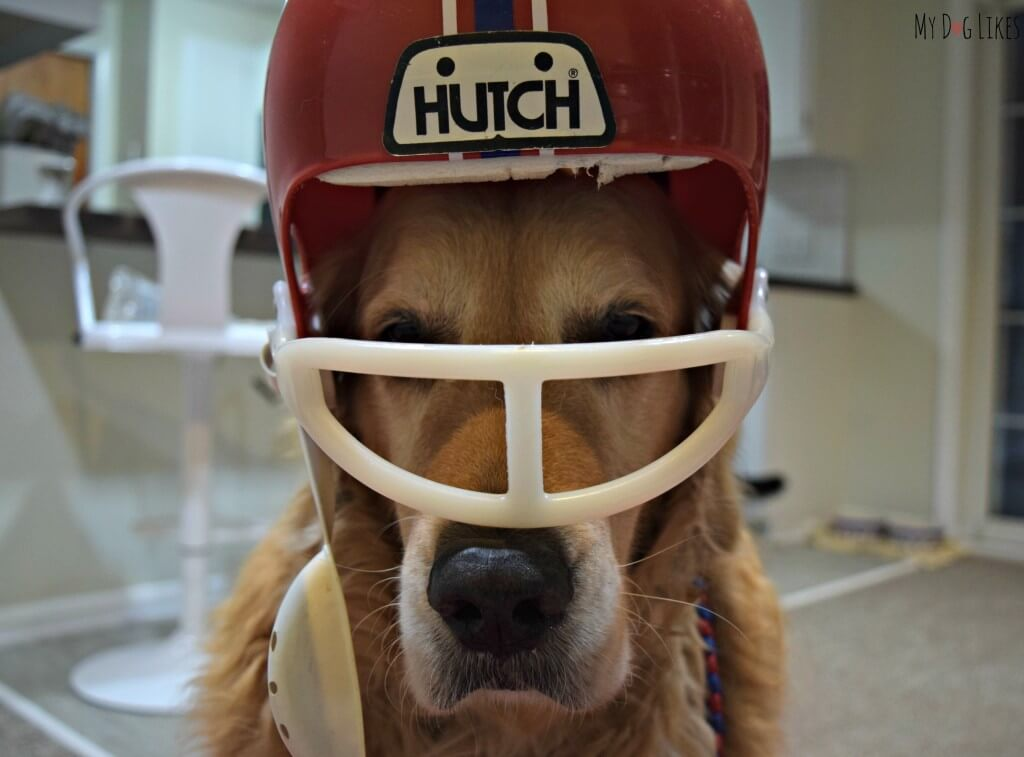 Harley all set for the SuperBowl in his dog football costume!
