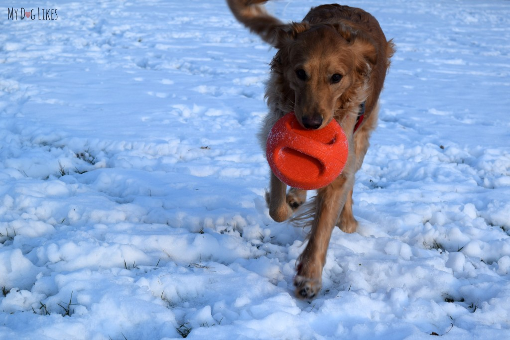 MyDogLikes is focused on reviewing and highlighting the toughest, most Heavy Duty Dog Toys on the market. Here we review the Zeus Bomber dog toy