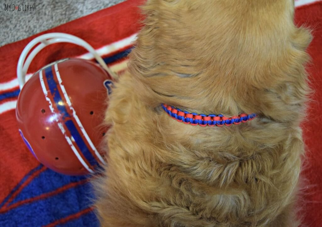Harley wearing his custom Paracord Dog Collar from Pudin's Paw!