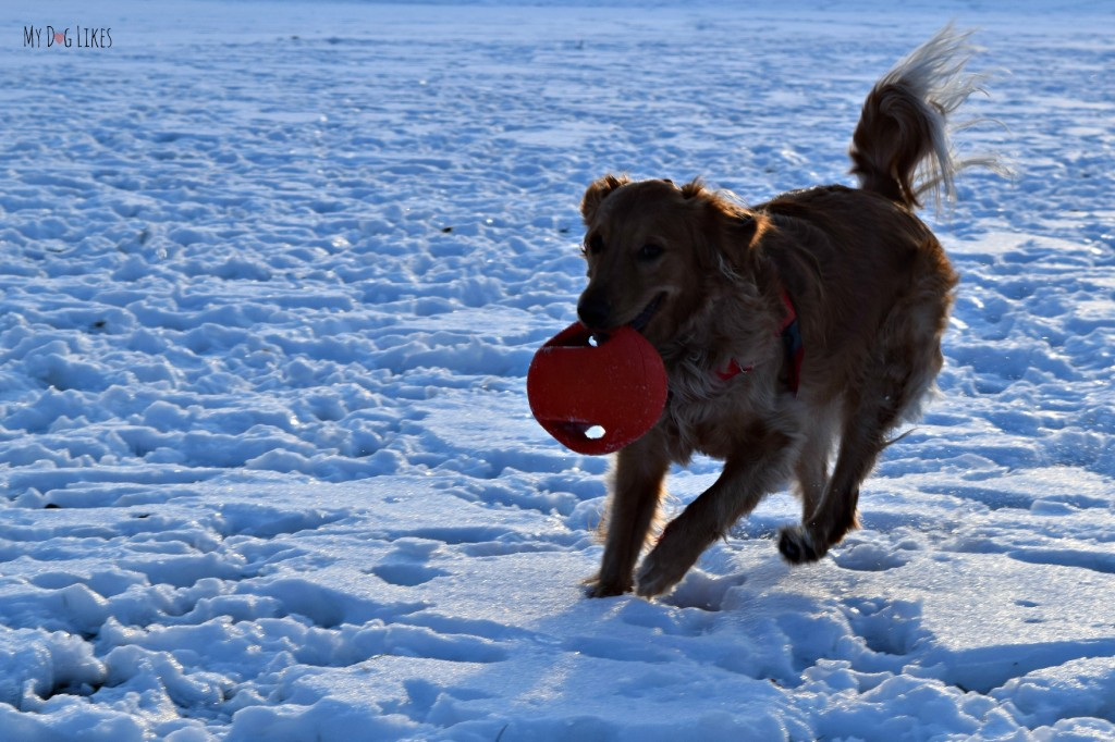 The Zeus Bomber is a great fetch dog toy. It's two handles also make it great for tug!