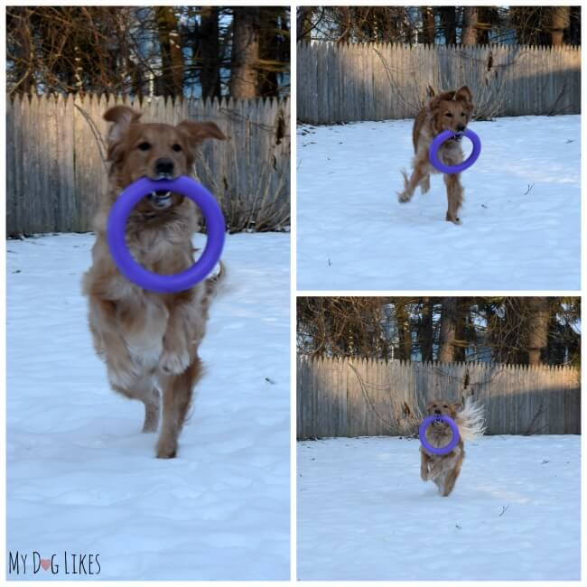 If you are looking for some cool dog toys, we highly recommend the Puller. This versatile toy is great for exercise and training.
