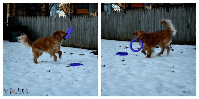 The Puller is more than just a dog toy - it functions as a dog training toy as well.