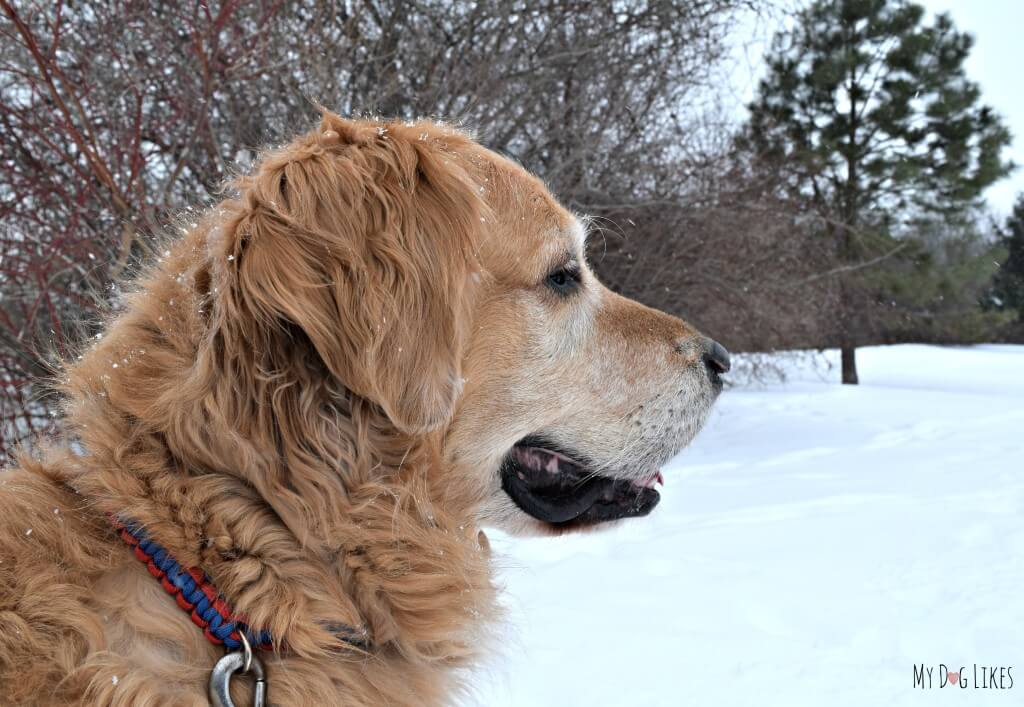 Black Creek Park in Rochester, NY is a great year round spot for Hiking with Dogs
