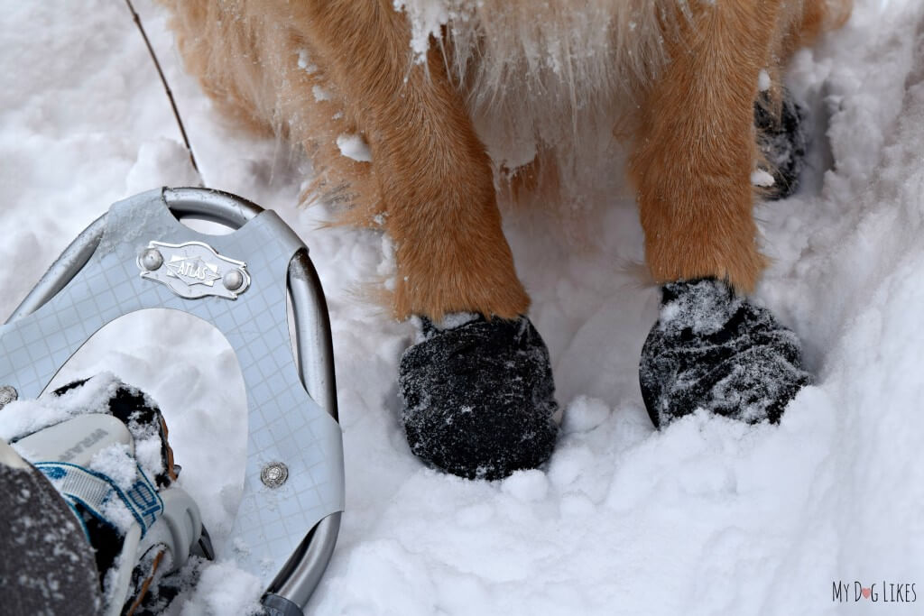 We strapped on our snowshoes and the dogs slipped on their Pawz and we were all ready for a fun winter hike!