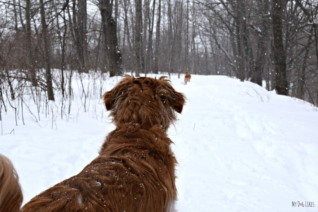 Heading down a Black Creek Park Trail with our dogs. Black Creek Park is located just outside of Rochester, NY.