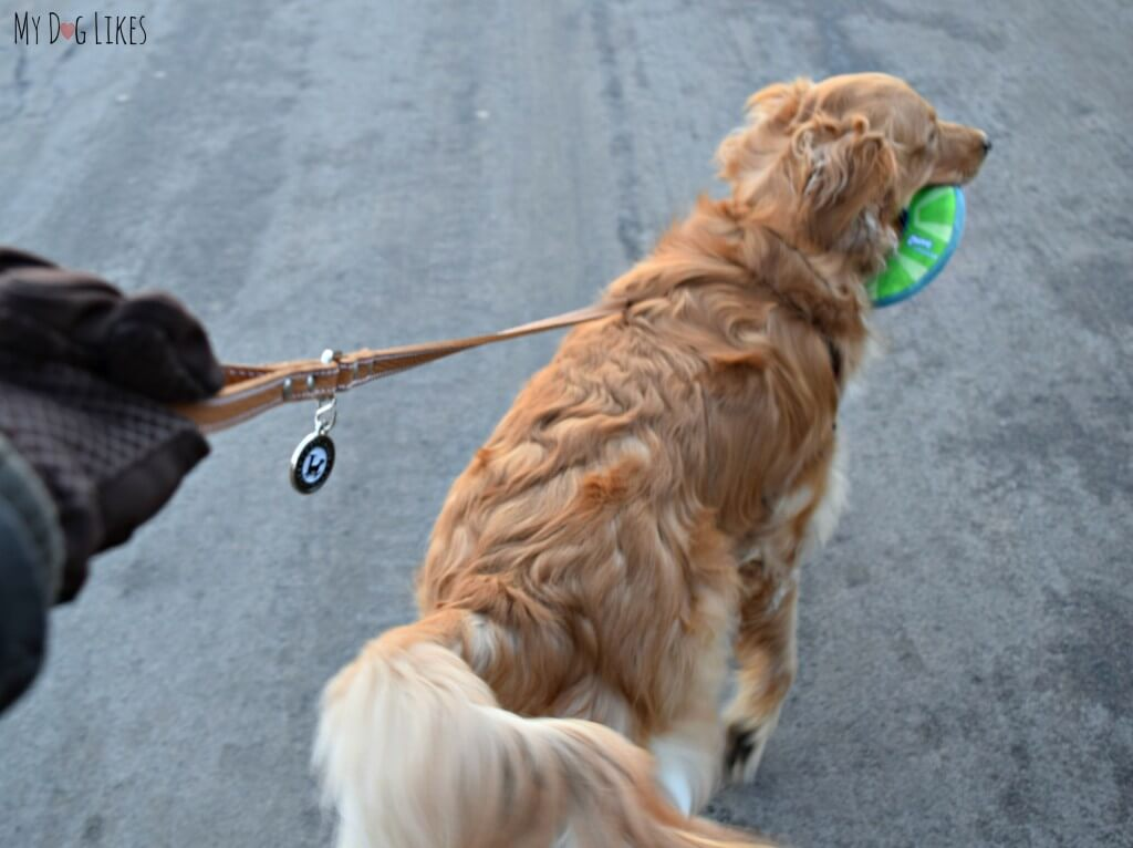 MyDogLikes testing a Legitimutt leather dog leash! Check here for our full review!