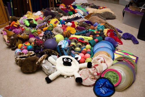 Testing grounds in Amato Pet's search for Tough Dog Toys! They will only sell dog products that are high quality and durable!
