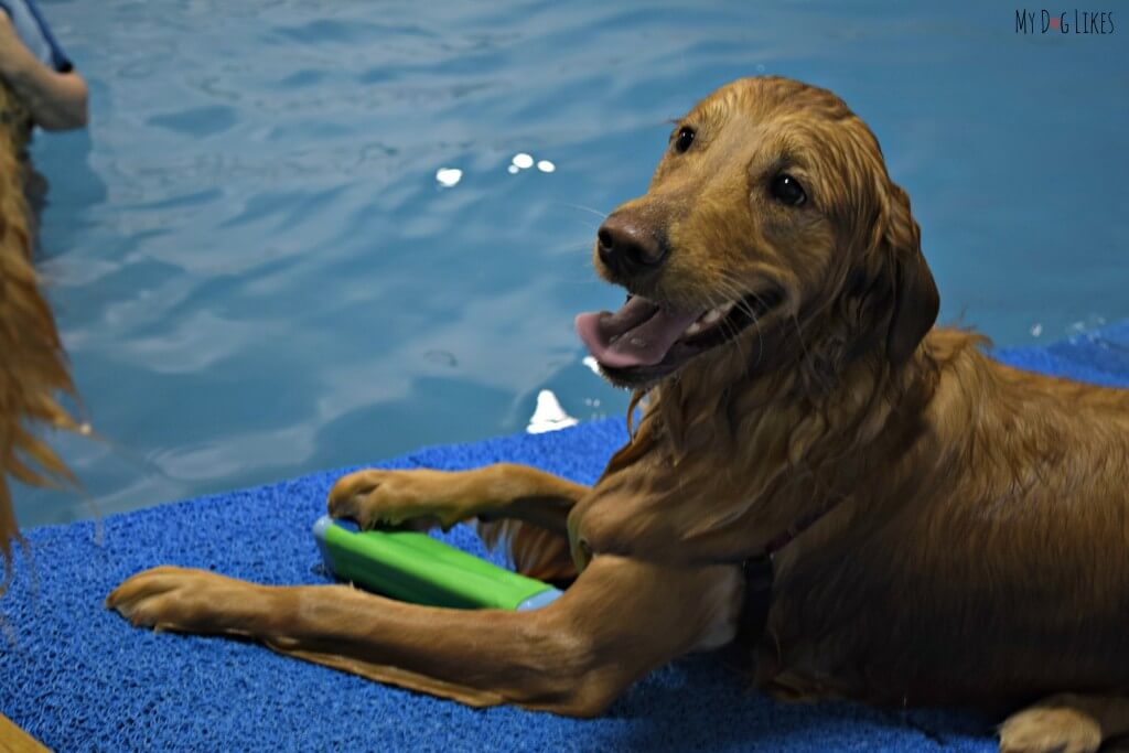 Our Golden Retriever Charlie is in heaven at the dog pool!