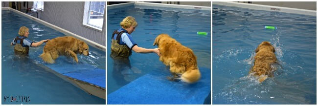 Harley getting the hang of the Swimming Pool Ramp for Dogs at CoolBlue Conditioning.