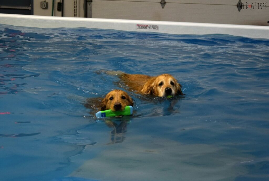 CoolBlue Conditioning near Rochester, NY offers indoor swimming for dogs!