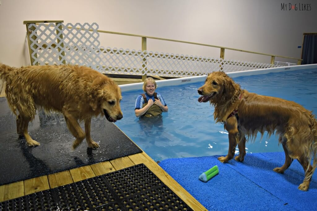 Our boys getting adjusted to the Dog Swimming Pool at CoolBlue Conditioning near Rochester, NY!