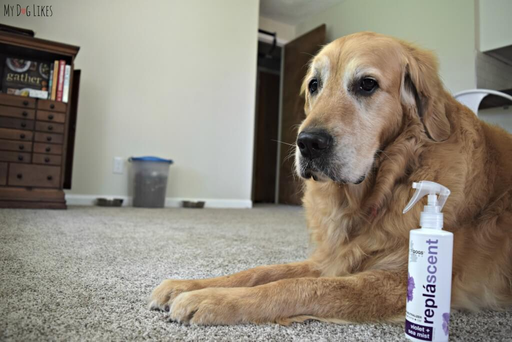 Looking for a Pet Odor Neutralizer? Try Isle of Dogs Replascent sprays to freshen up your home!