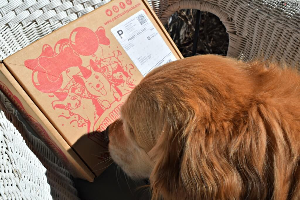 Charlie sniffing out his Pooch Party Packs dog subscription box!