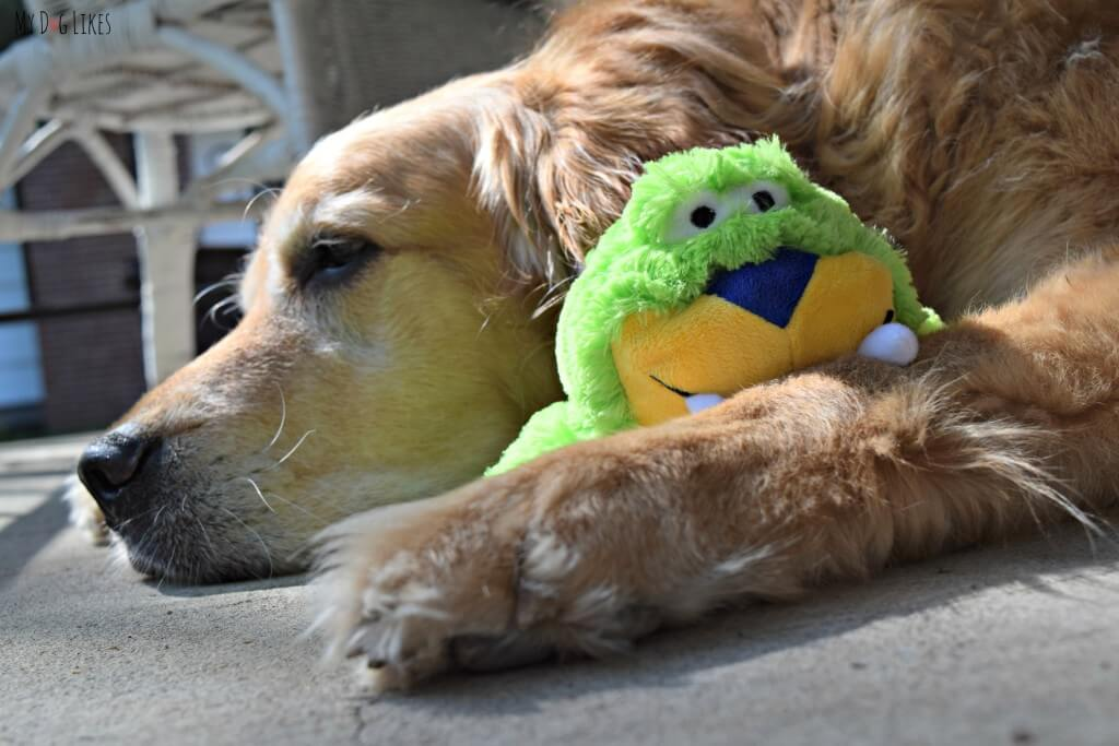 Harley snuggling with his Kong Knots plush dog toy